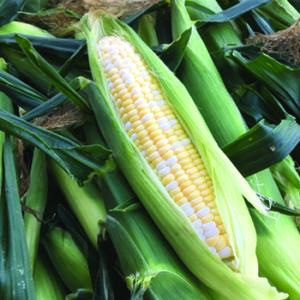 Corn (Sweet)
