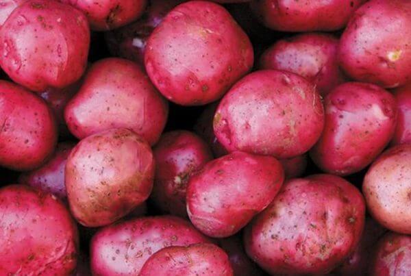 Viking Potato