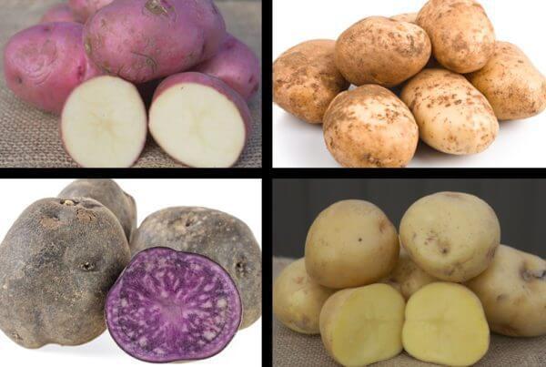 Homestead Potato Sampler