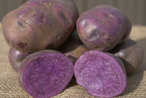 Adirondack Blue Potato