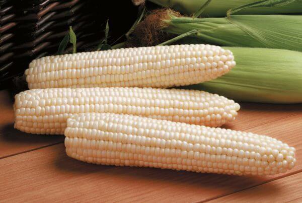 Avalon Sweet Corn