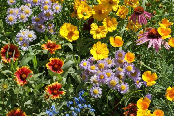 Bee Feed Wildflower Mix
