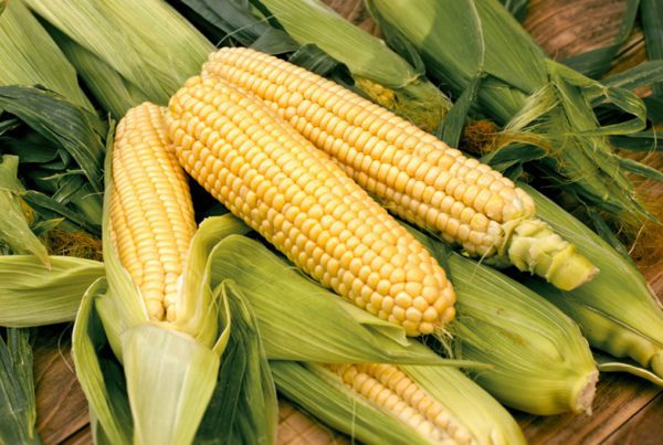 Bodacious Sweet Corn