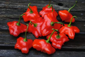 Brazilian Orchid Pepper