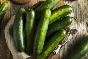 Bristol Cucumber