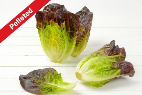 Calshot Romaine Lettuce