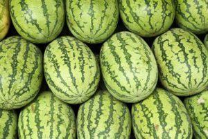 Carolina Cross 180 Watermelon