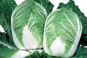China Express Cabbage