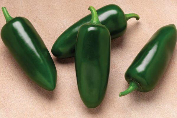 Cinder Jalapeno Pepper