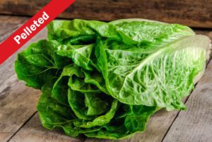 Coastal Star Romaine Lettuce