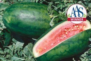 Congo Watermelon