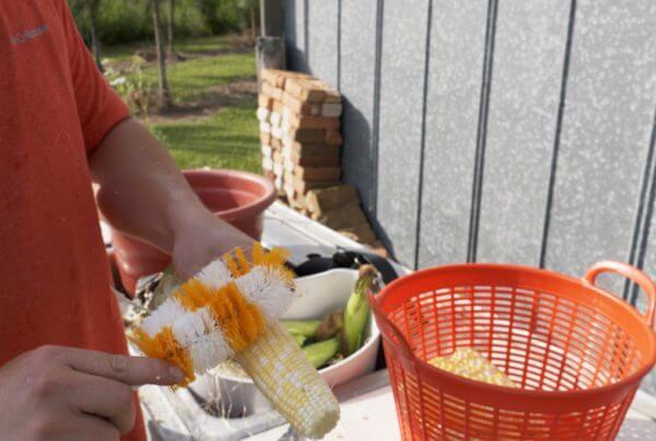 Corn Silking Brush