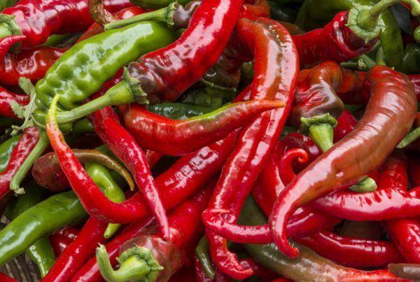 Cowhorn Hot Pepper