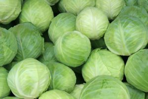 Early Round Dutch Cabbage