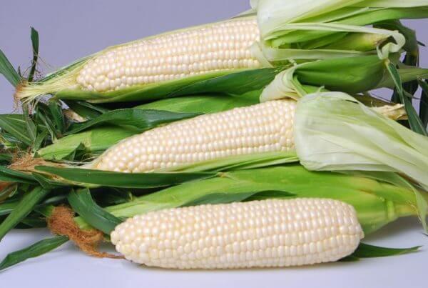 Eden Sweet Corn