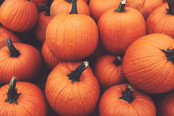 Fall Splendor Pumpkin
