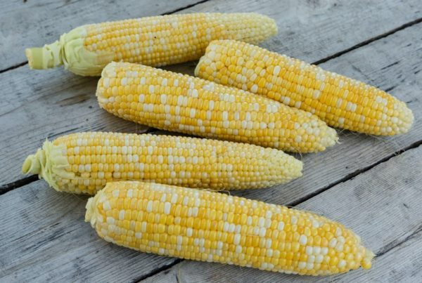 G90 Sweet Corn