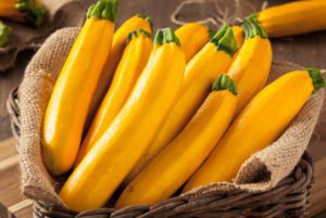 Golden Delight Zucchini