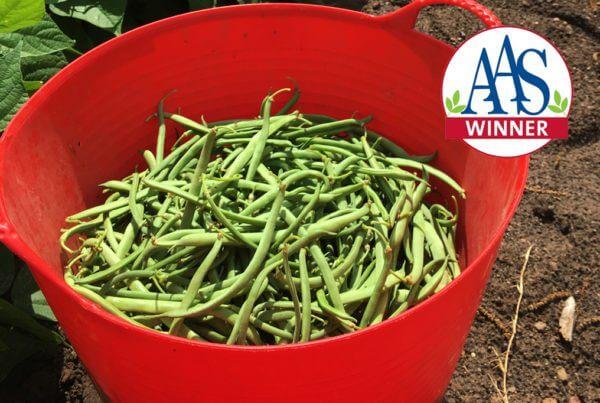 Green Crop Bush Bean
