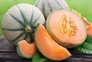 Hale's Best PMR Cantaloupe