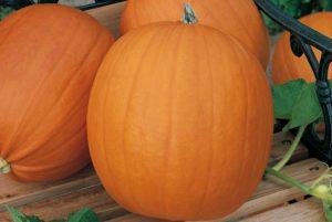 Hobbit Pumpkin