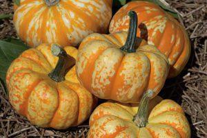 Hooligan Pumpkin