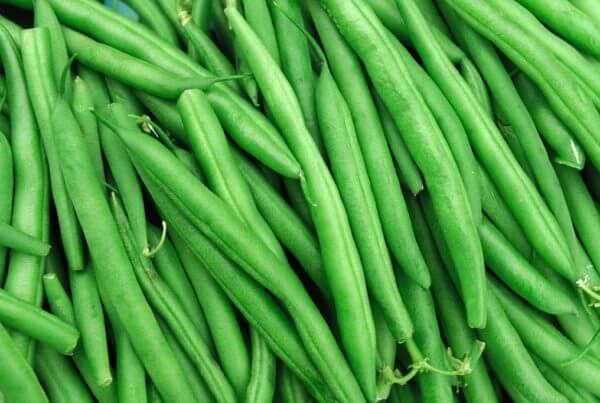 Jade Bush Bean