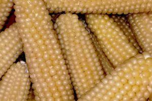 Japanese Hullless Popcorn