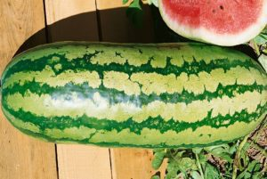 Jubilee Watermelon