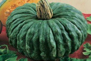 Marina De Chioggia Pumpkin