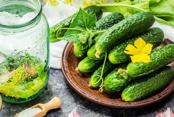 Max Pack Cucumber