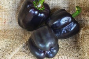 Merlot Purple Bell Pepper