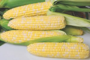 Nirvana Sweet Corn