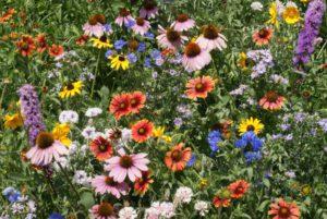 Northeast Wildflower Mix