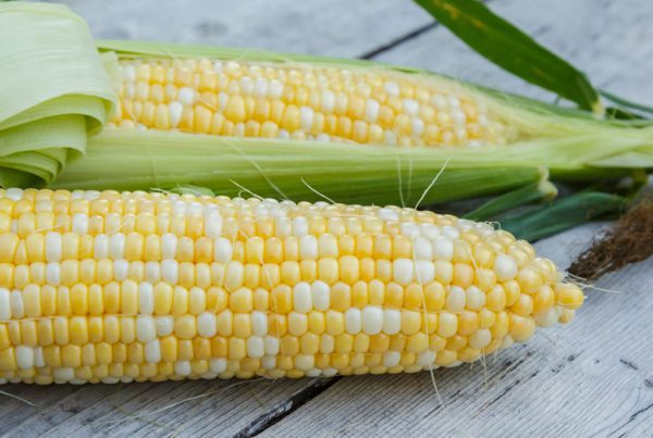 Obsession Sweet Corn