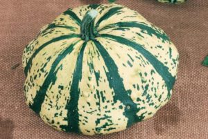 Partial Eclipse Squash