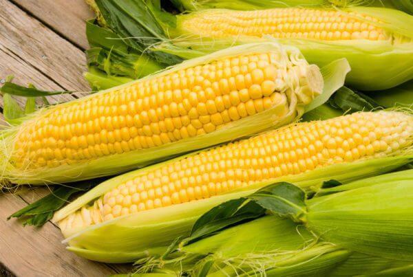 Passion Sweet Corn