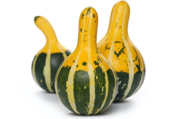 Pear Bicolor Gourd