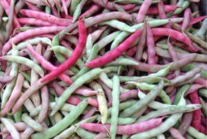 Pink Half Runner Bean