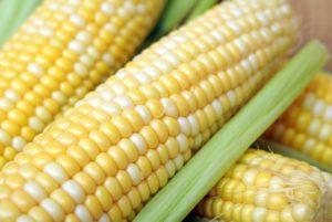 Primus Sweet Corn