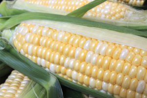 Providence Sweet Corn