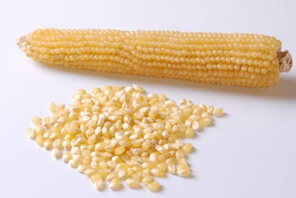Robust White Popcorn