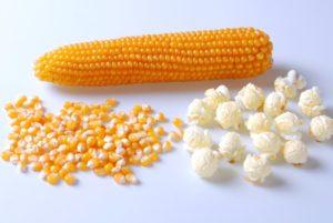 Robust Yellow Popcorn