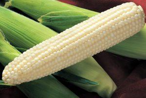 Silver King Sweet Corn