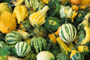 Small Gourd Mix