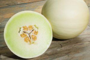 Snow Mass Melon
