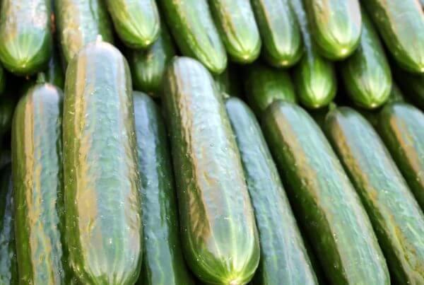 Stonewall Cucumber