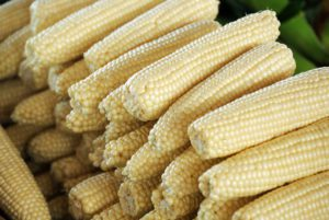 Stowell's Evergreen Sweet Corn