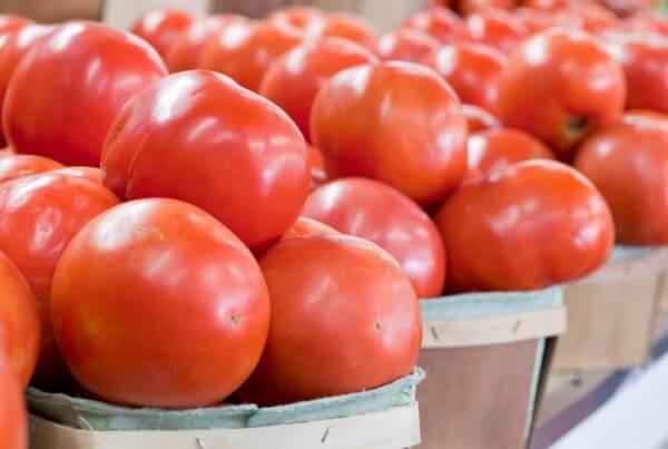 SummerPick Tomato