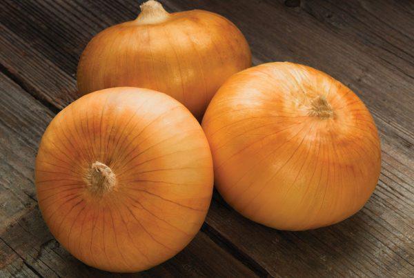 Sweet Harvest Onion